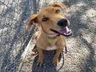 FREE adoptions Saturday at county shelters