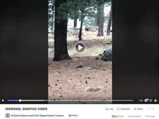 GRAPHIC VIDEO: AZ bear chases, kills other bear