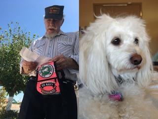 Veteran asking for return of stolen service dog