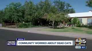Mesa residents concerned about mutilated cats