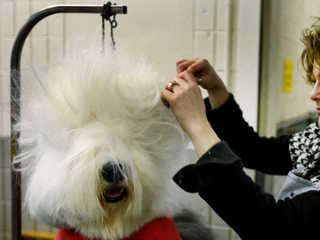 Why are dogs dying after getting groomed?