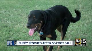 Puppy rescued after falling off Arizona cliff