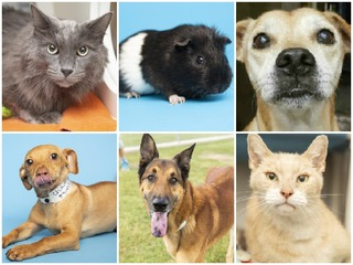 PHOTOS: 25 pets up for adoption in the Valley