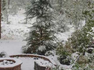 Snow, rain fall in northern Arizona