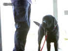 PHX FD may get 'arson dog' to help solve crimes