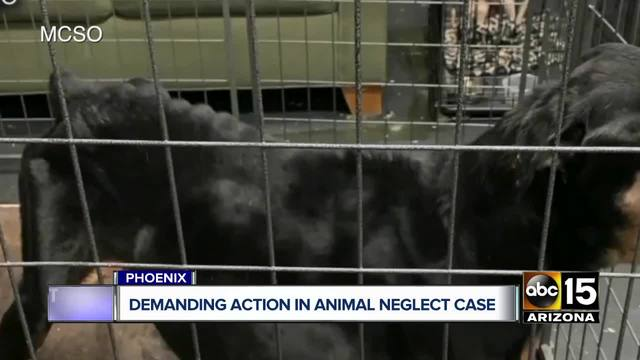 Protesters demand action in Mesa shelter animal neglect case