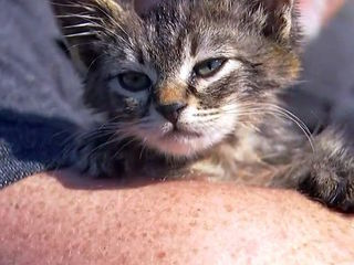Oregon man rescues kitten glued to busy road