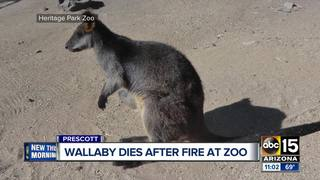 Wallaby killed, other hurt in Prescott zoo fire