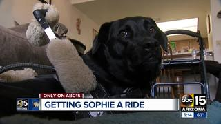 Volunteers help Valley service dog and owner